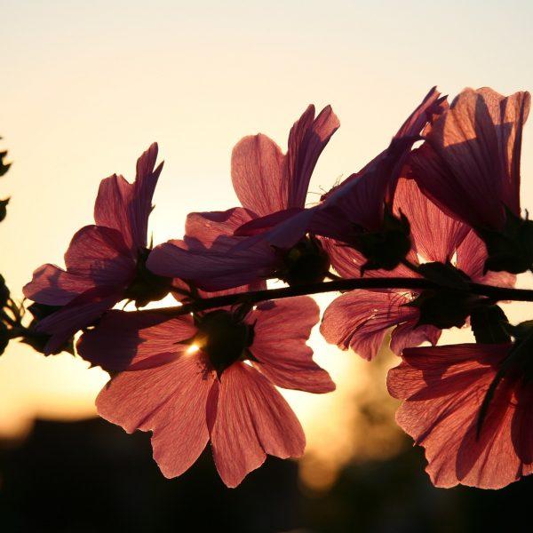 flower-646127_1920